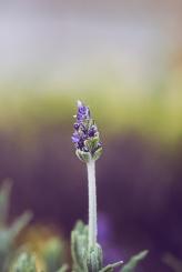 purplebokeh